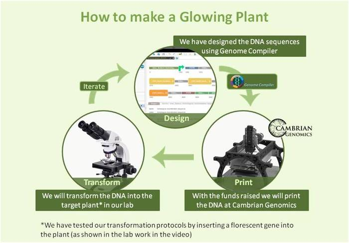 glowing-plants-lightsource-innovation