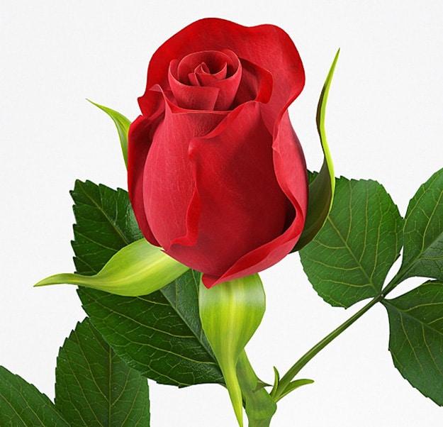 geek-love-3d-printed-rose