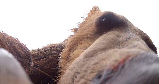 What It Would Be Like To Get Eaten By A Bear In Alaska [Video]