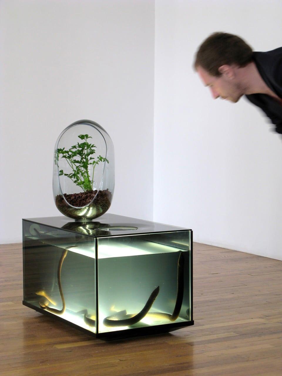 freshwater-fish-vegetable-patch-aquarium