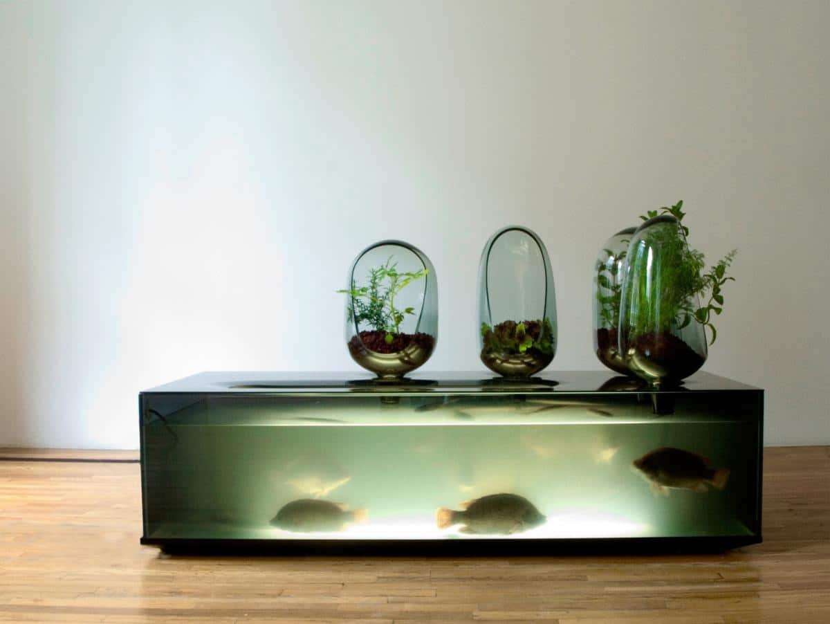 freshwater-fish-vegetable-patch-aquarium