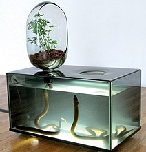 Indoor Eco-System With Freshwater Fish & Vegetable Patch Mimics Nature