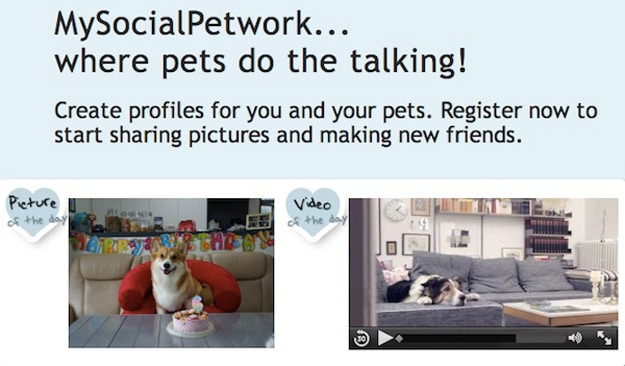MySocialPetwork: A Social Media Site That Is Like Facebook For Pets
