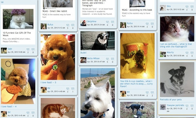 facebook-for-pets-social-network