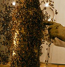 3B Printing Project: 80,000 Bees Make Whiskey Bottle Out Of Honeycomb