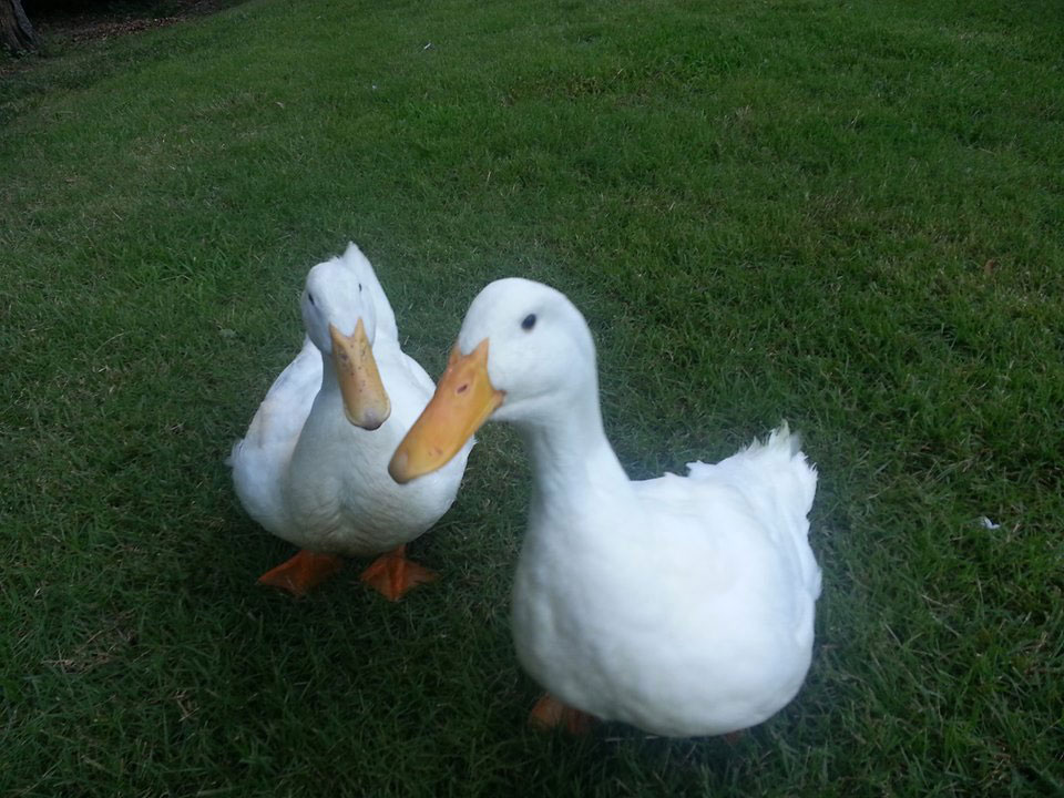 duck-3d-printed-webbed-foot