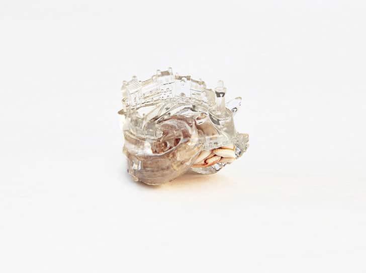 3d-printed-hermit-crab-shells