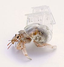 3D Printed Clear Hermit Crab Shells Inspired By Famous Architecture