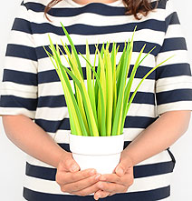 Office Plant Made Of Green Pens For Workaholics Without A Green Thumb