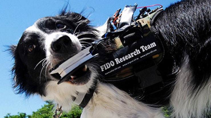 Wearable Computers For Rescue Dogs Will Help With Canine Communication