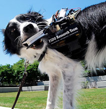 wearable-computers-dogs-with-jobs