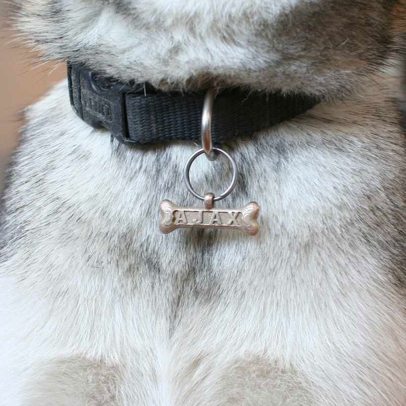 Let Your Dog Go High Tech With 3D Printed Personalized Dog Tags