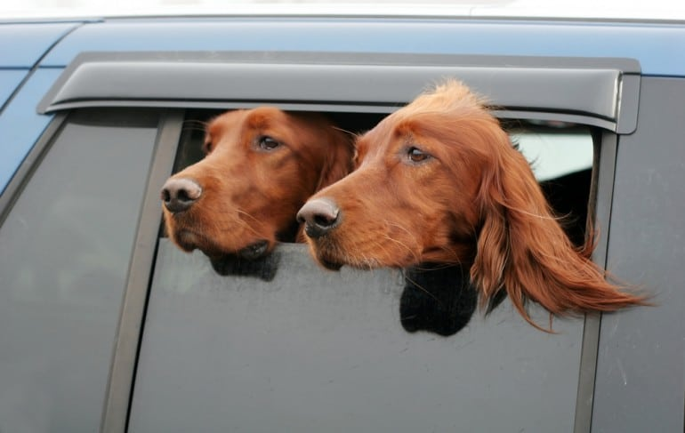 heat-alerting-dog-collar