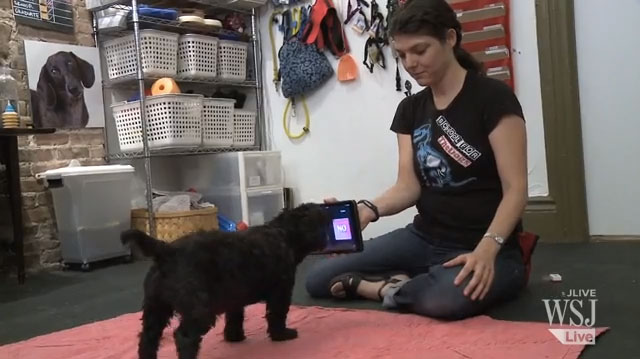 How To Train Your Dog To Use An iPad [Video]