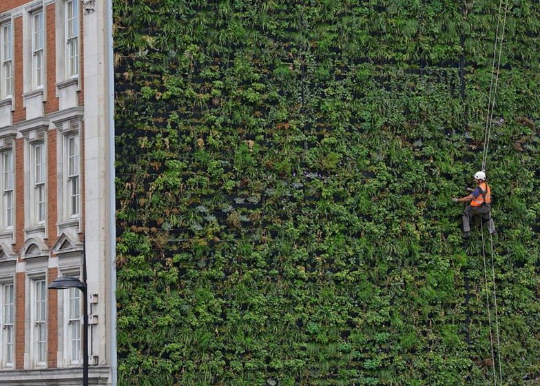 London's Largest Living Wall Is Also A Sustainable Drainage System