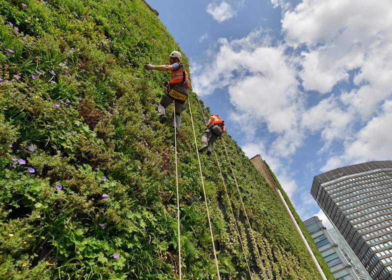 london-living-wall-plant
