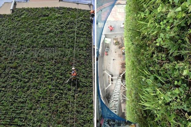 london-living-wall-plants