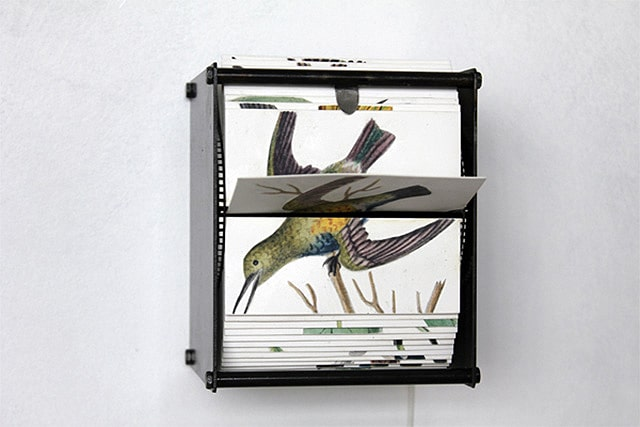 Incredible Motorized Flipbook Machines Made With Wild Bird Drawings