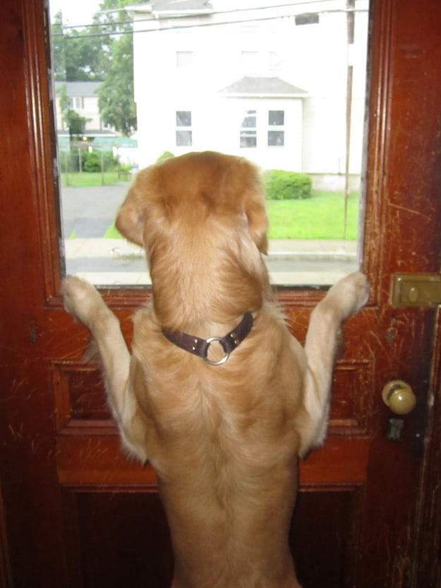 Bark Activated Door Opener