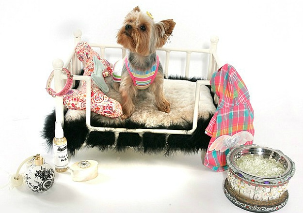 Pampered Pets Luxury Gifts