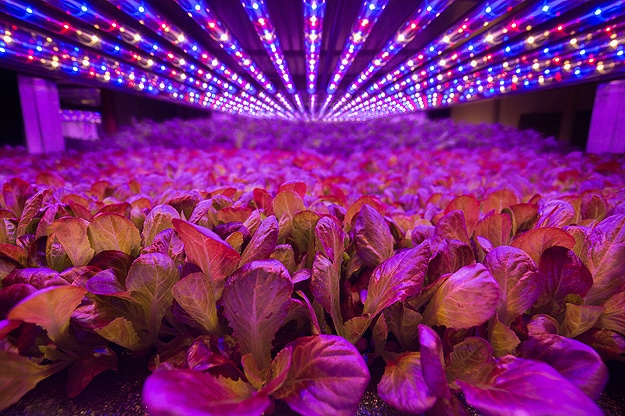 AeroFarms Newark Vertical Farm