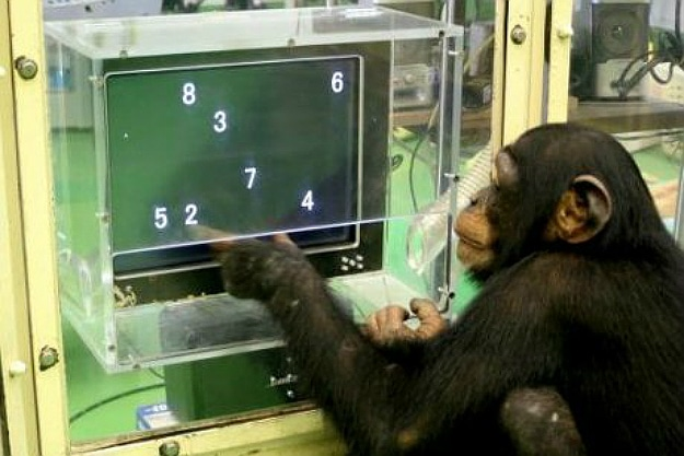 Chimpanzees Have A Better Short-Term Memory Than You