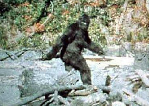 9 Reasons Bigfoot Still Exists