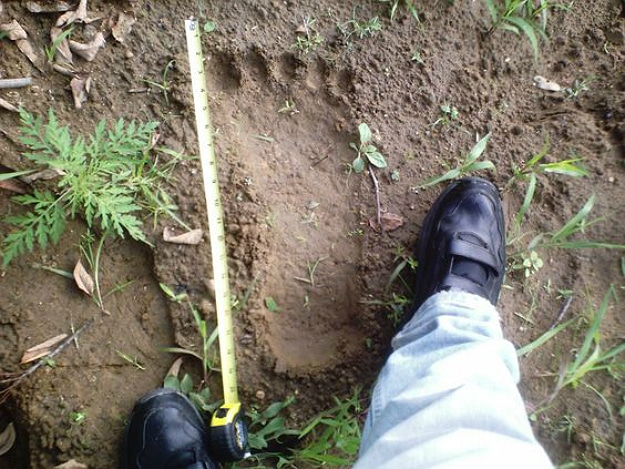 9 Reasons Bigfoot Still Exists
