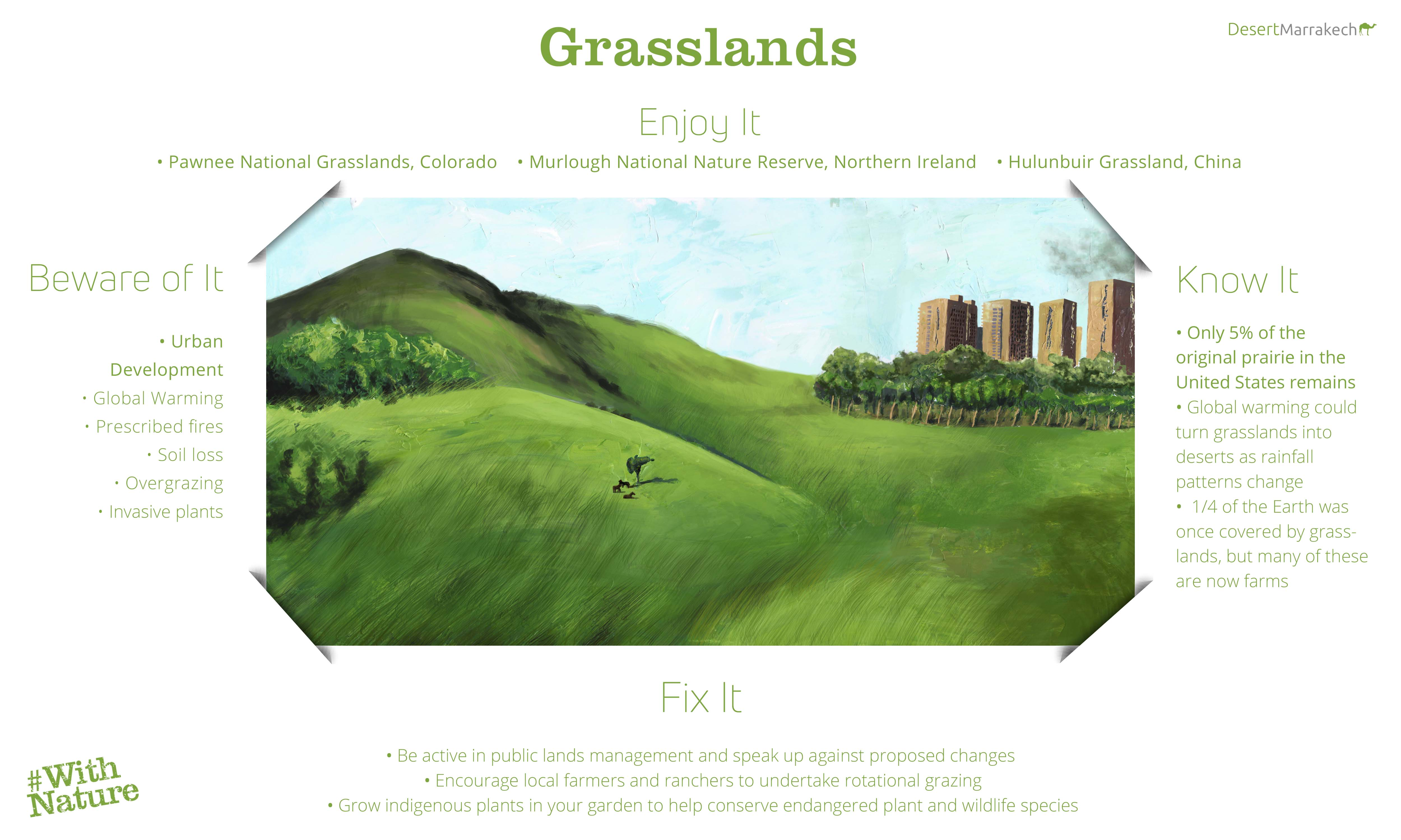 World Environment Day Grasslands Infographic