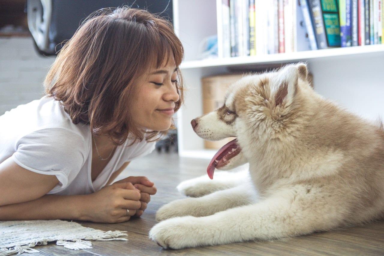 23 Dog Body Language Header Image