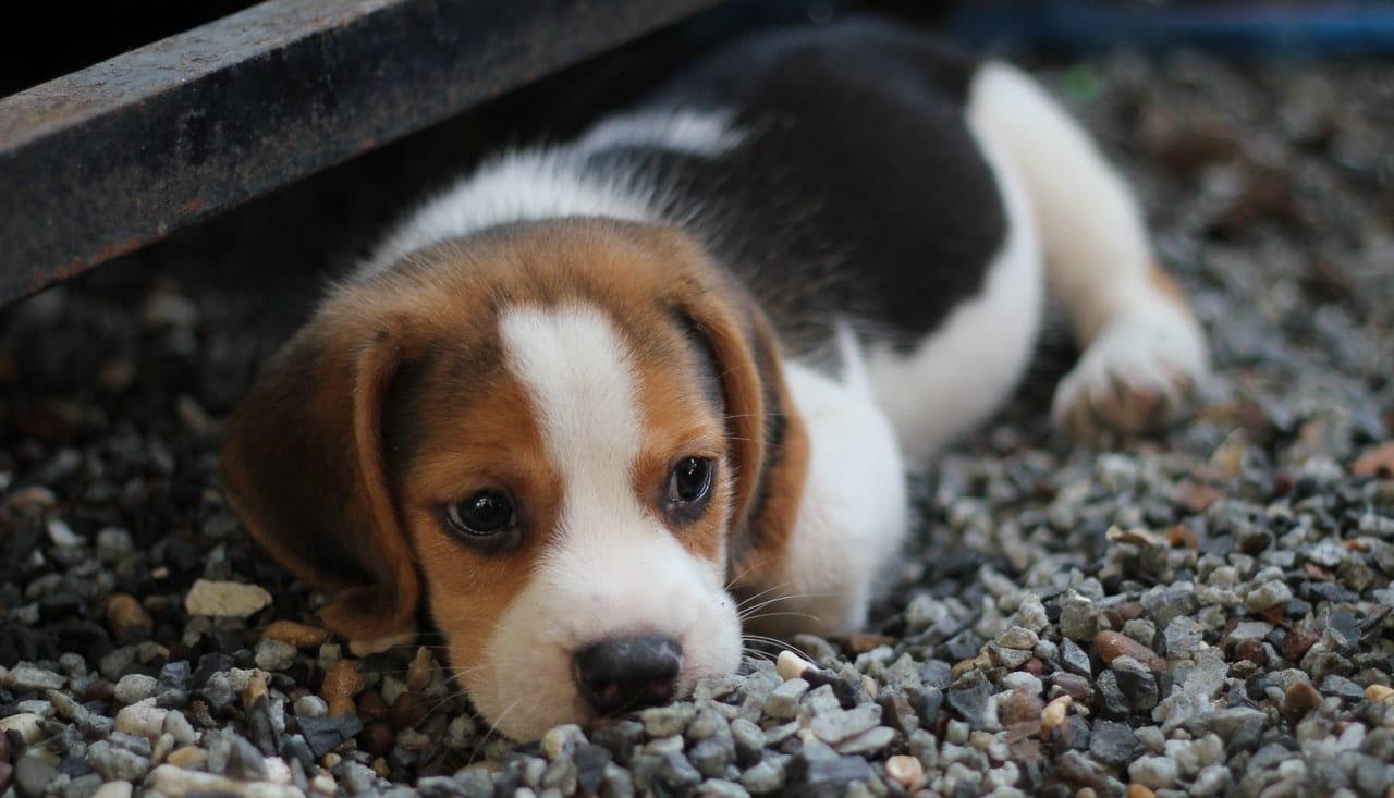 Dog Vet Visit Indications Header Image
