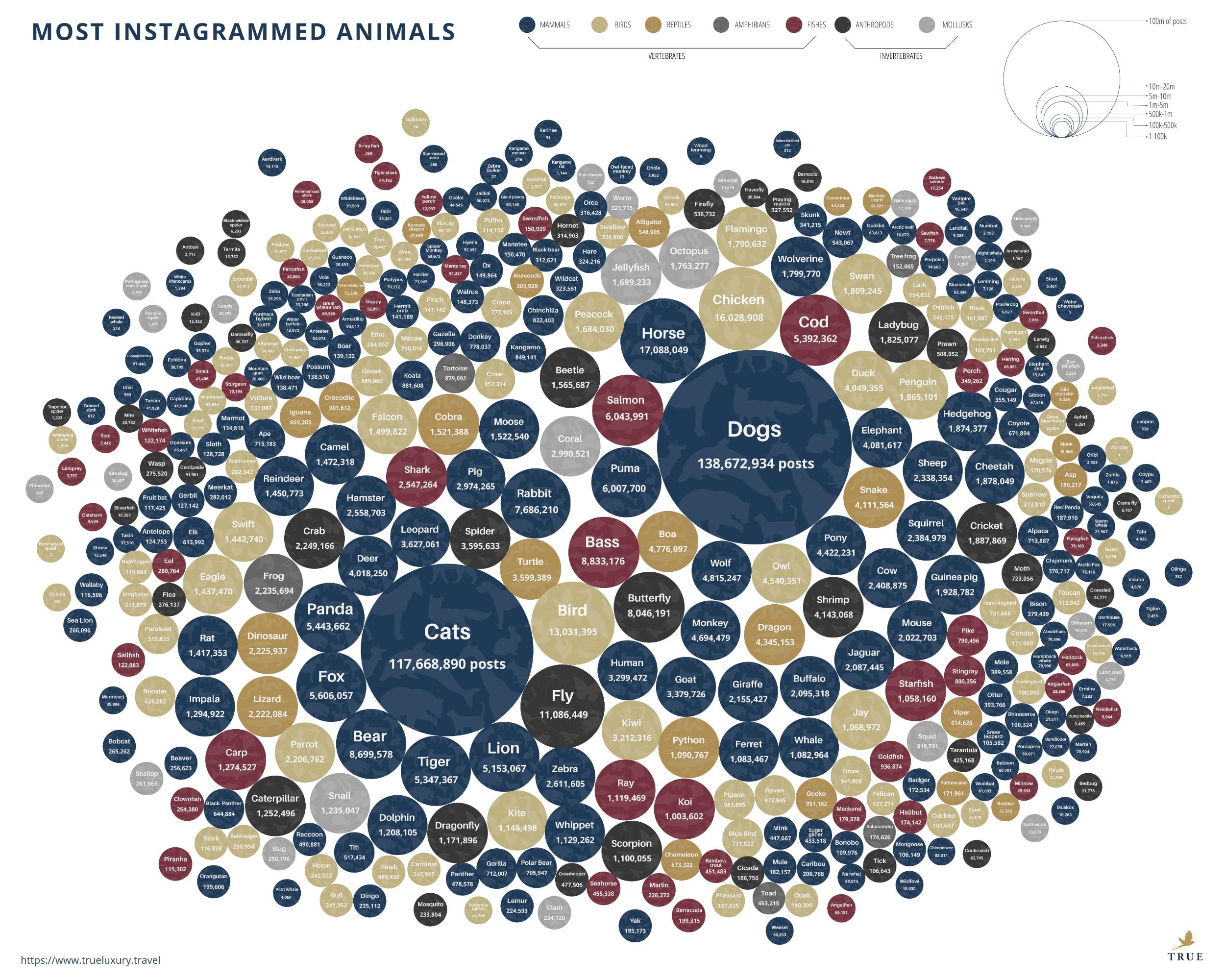Most Instagrammed Animals Statistics Infographic