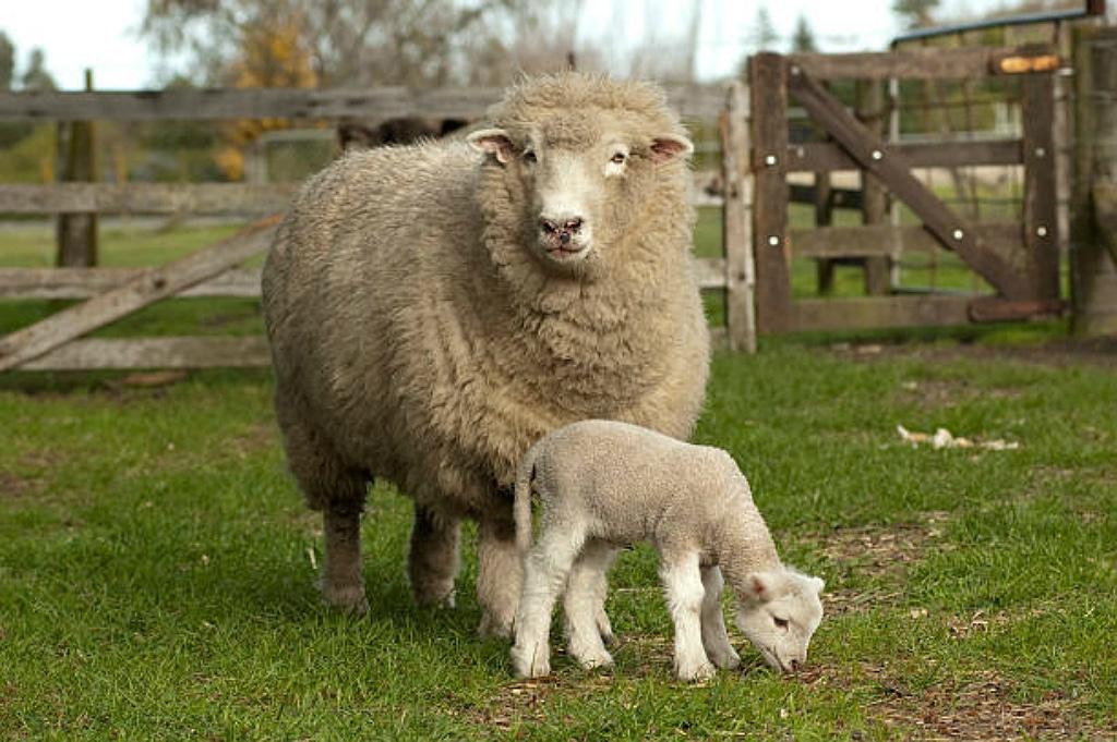 Merino Wool Clothing Header Image