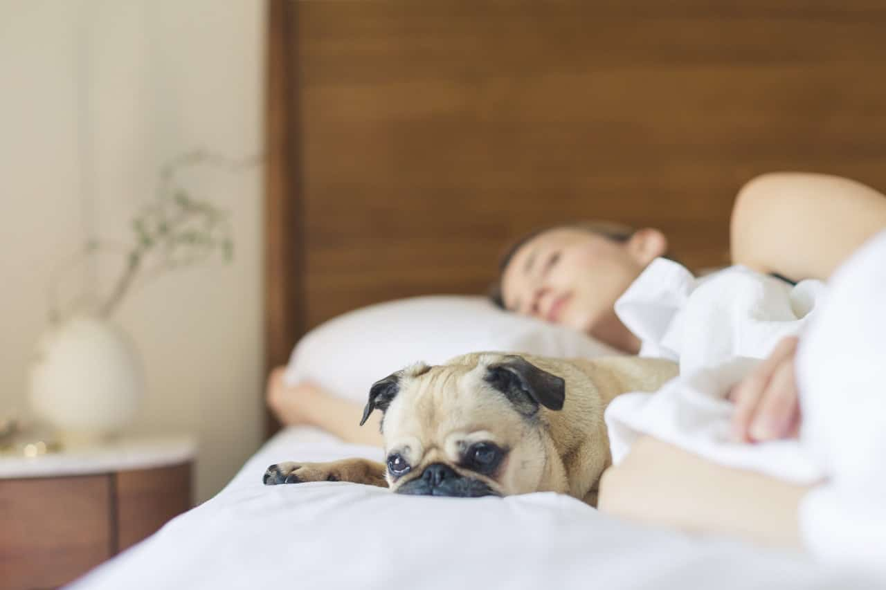 Top Mattress Apps To Track Your Sleeping During Night