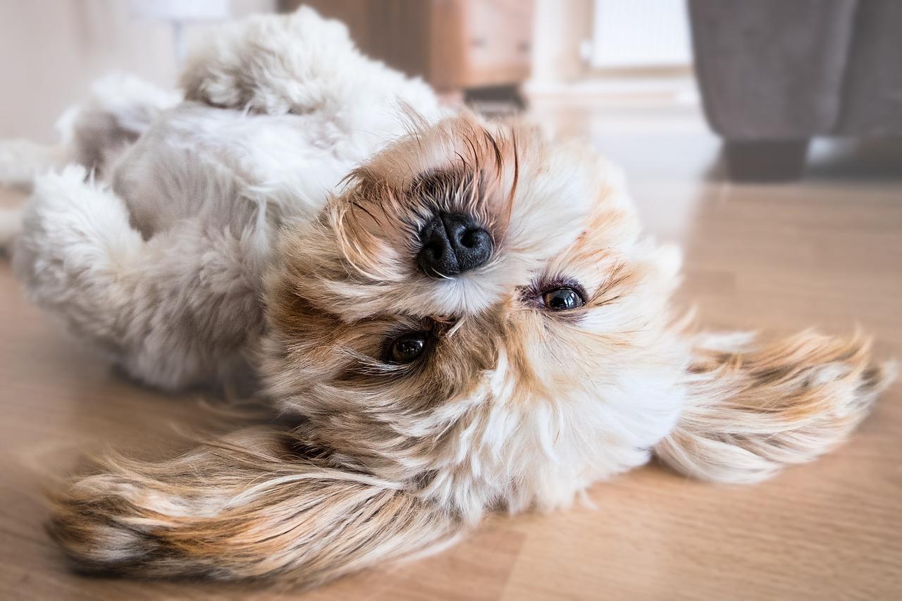 Fun Dog Activities Article Image
