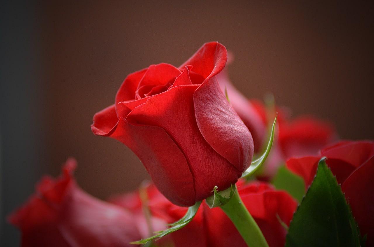 International Online Florist Article Image