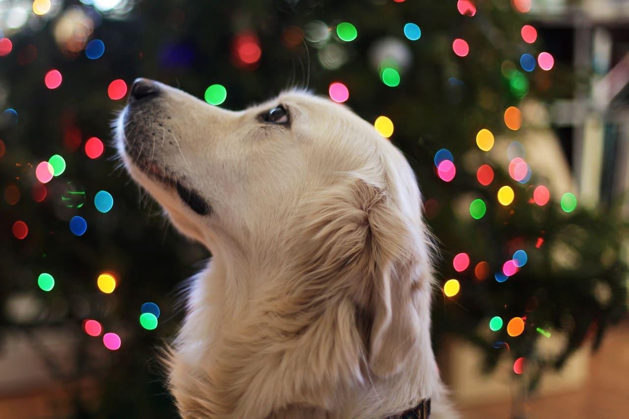 Dog Christmas Time Header Image