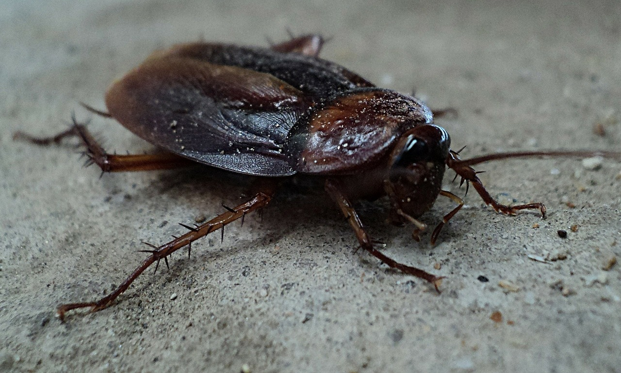 Pests Around Your House That You Must Always Be On The Lookout For