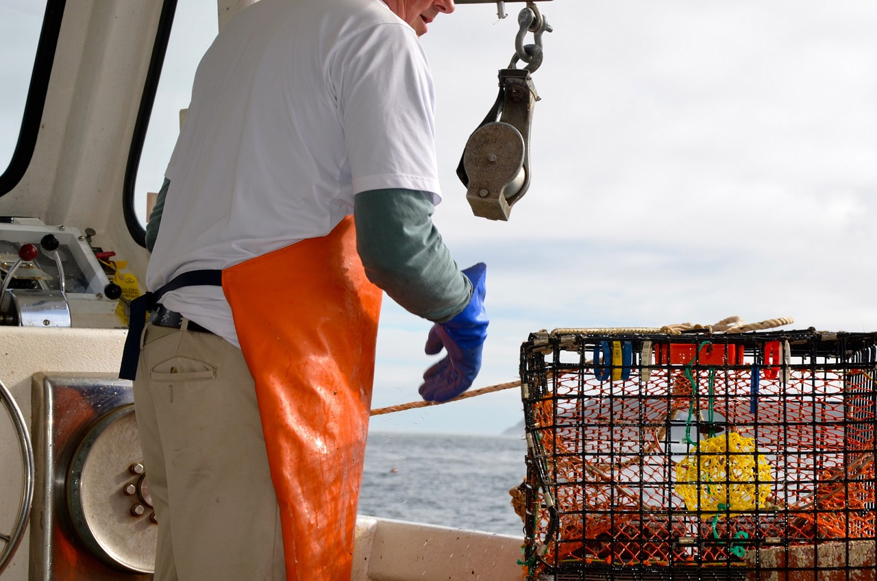 Everything You Ever Wanted To Know About Lobster Season