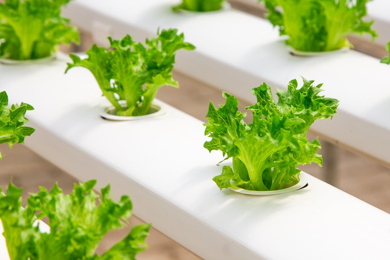 Build Hydroponic System Header Image