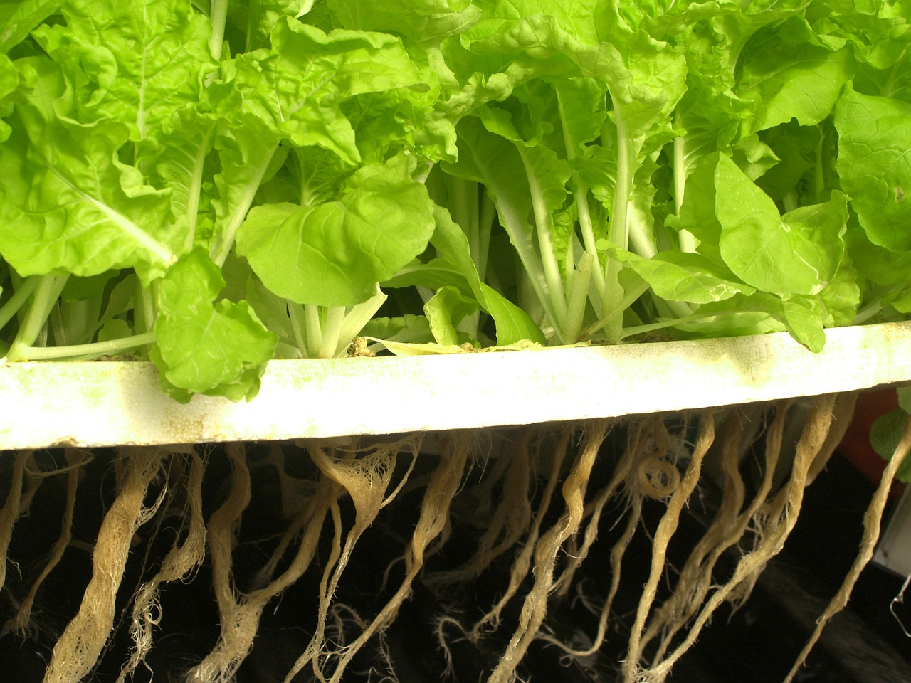 Build Hydroponic System Article Image
