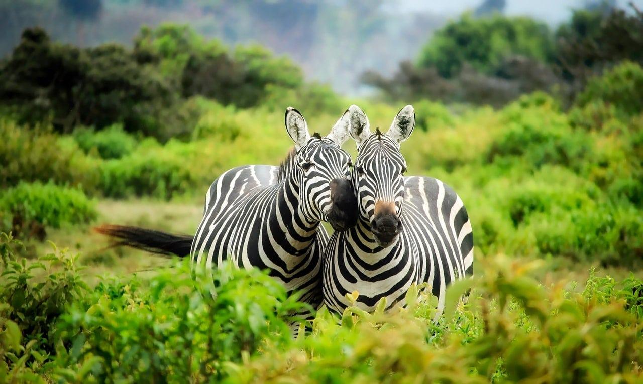 Best Safari Spots Africa Article Image
