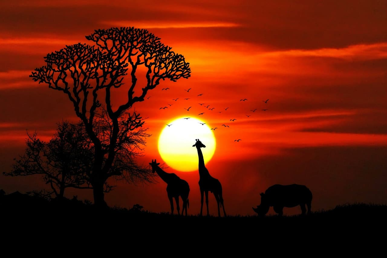 Best Places To Spot Animals On An African Safari