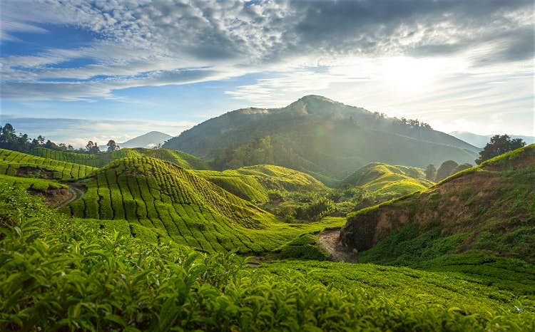 Top Asian Highland Destinations That Offer A Perfect Summer Retreat