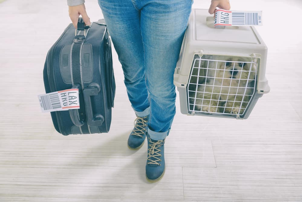 Airline-Approved Pet Cage Header Image