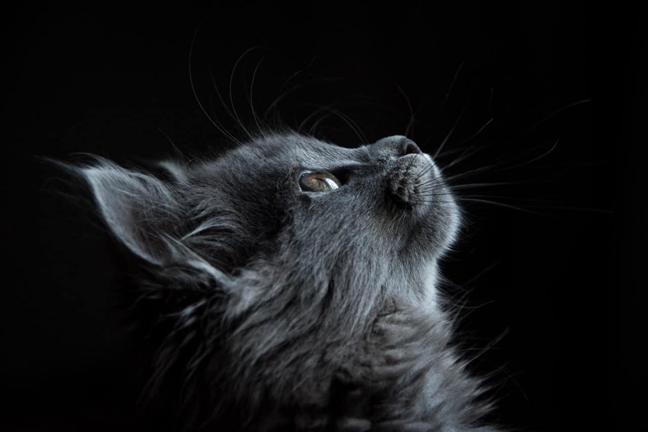 Reasons Own Pet Header Image