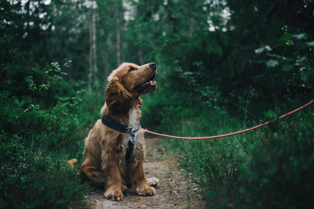5 Dog Training Commands Header Image