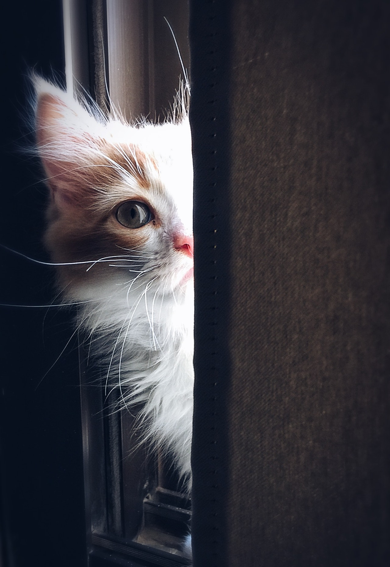 Cat Person Know Article Image
