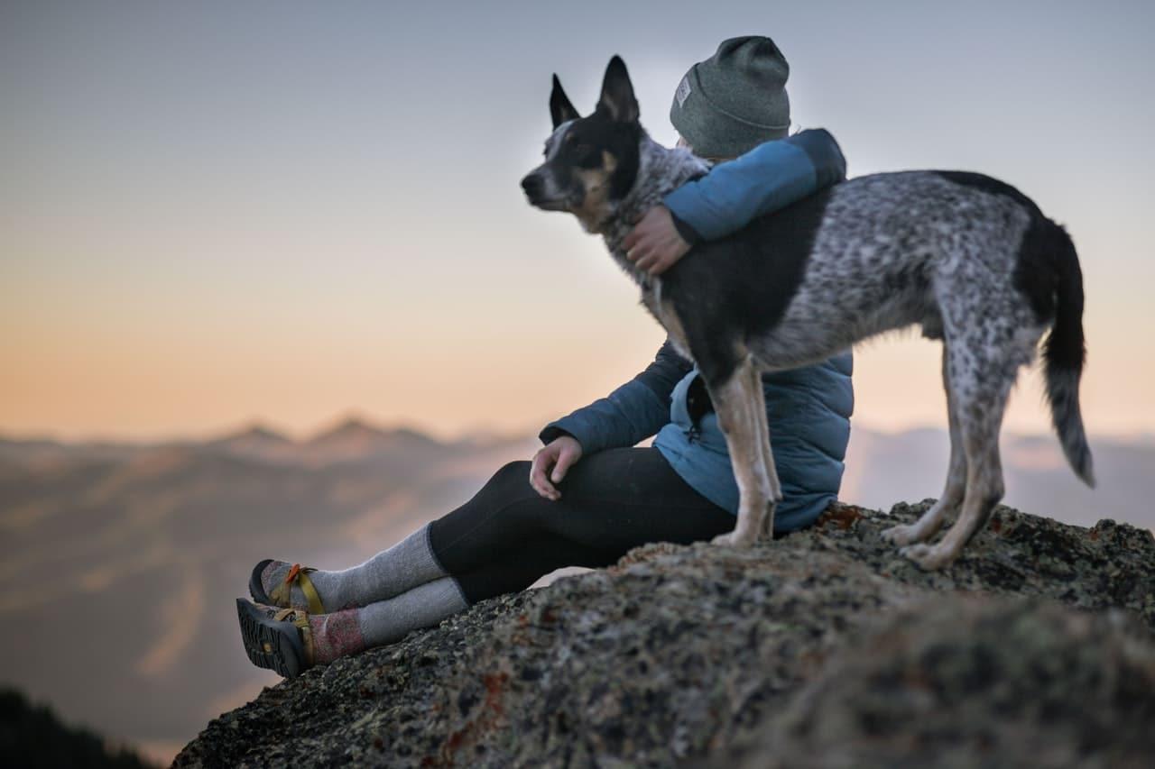Get Fit Dog Tips Header Image