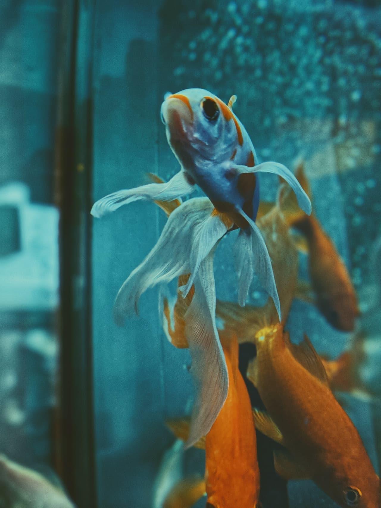 Fish Pets Health Article Image